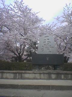 4月27日 天童公園